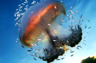 факты о медузах