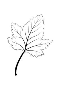 Картинки с листьями распечатать