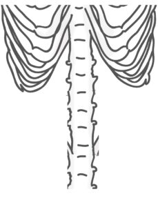 Анатомия для детей - распечатать скелета кости