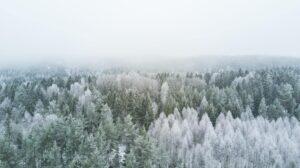 Стихи для детей про зиму и Новый год