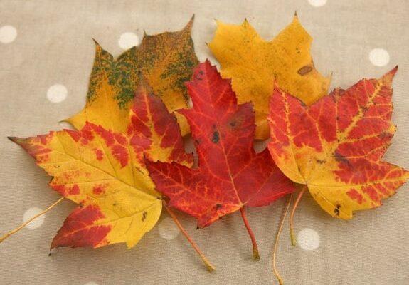 детские поделки из осенних листьев