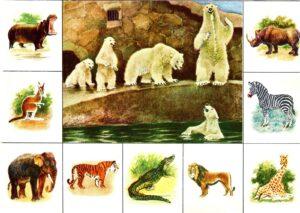 настольные игры Зоологическое лото - распечатай и играй